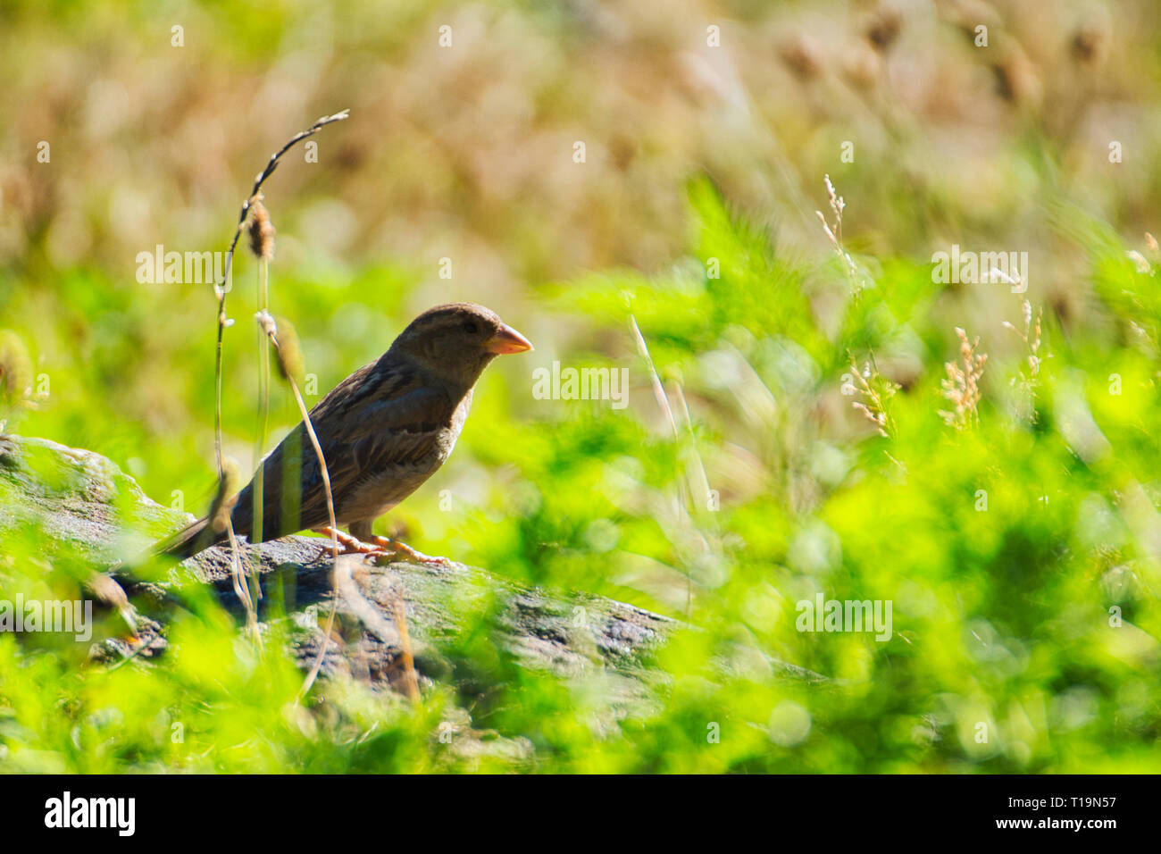 Perched Bird Stock Photo