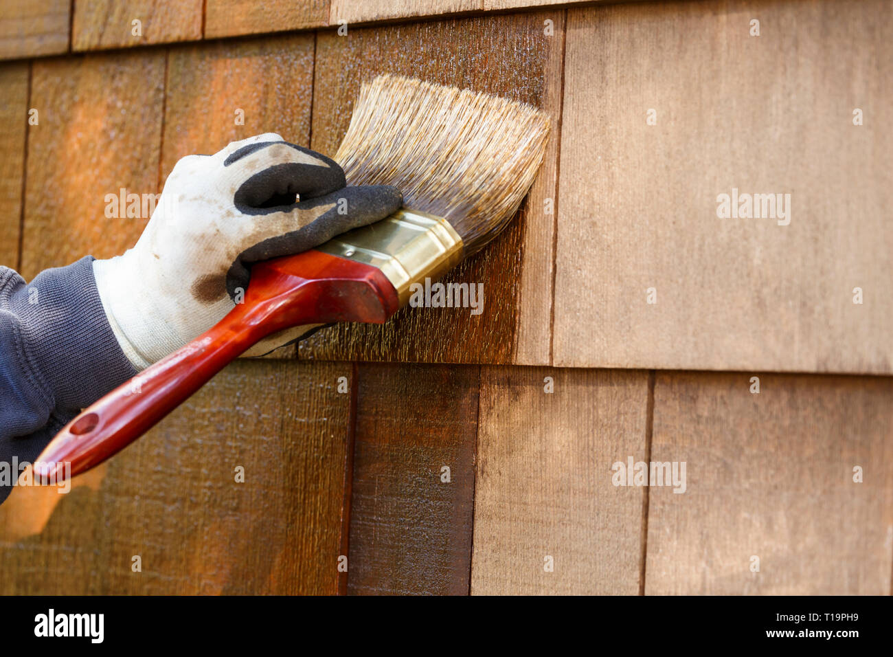 Close-up of hand wearing protective work gloves with brush paintbrush applying stain to cedar wood shingles exterior siding. Home improvement DIY. - Stock Image