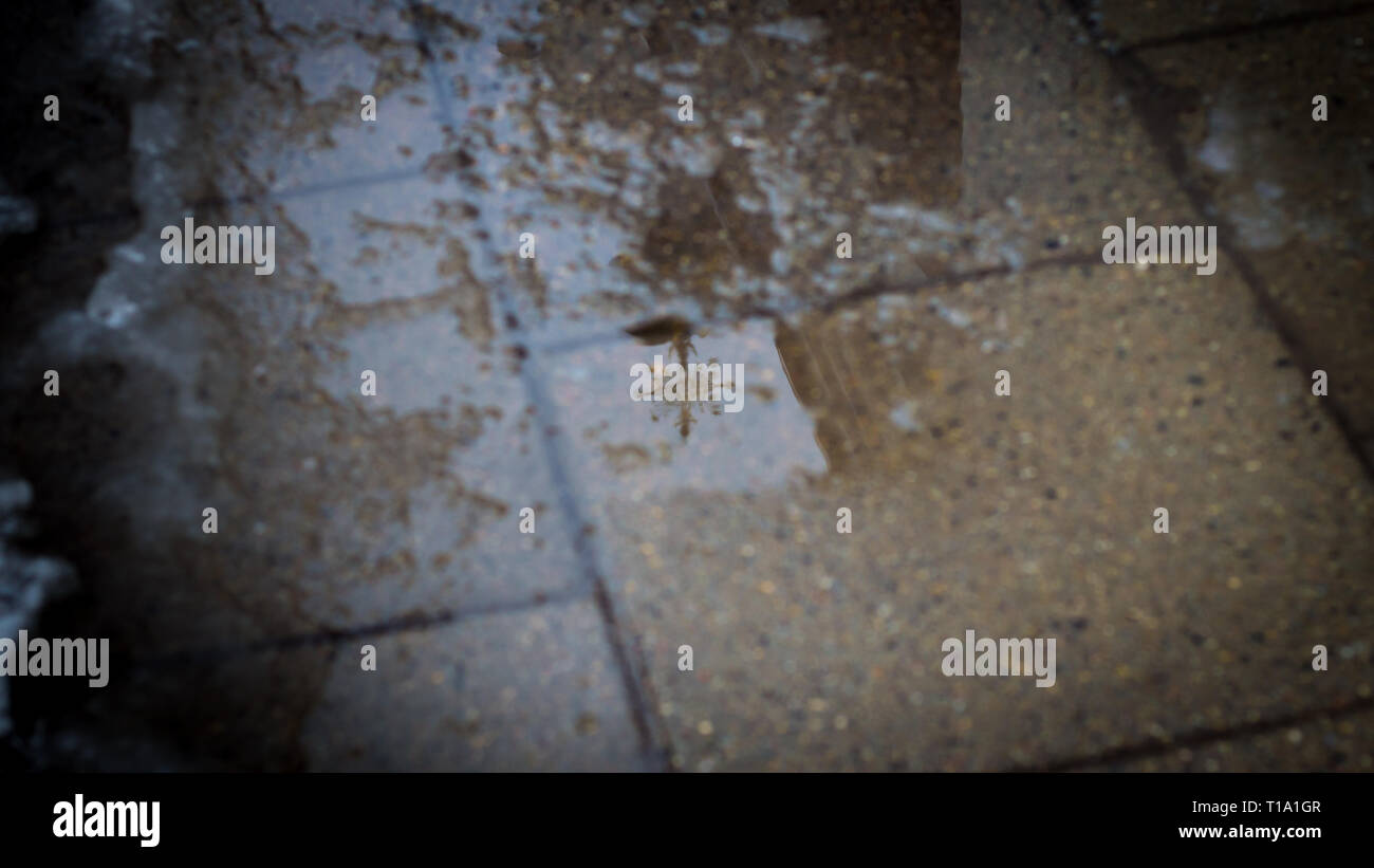 A reflection of a church cross in a water puddle on pavement - Stock Image