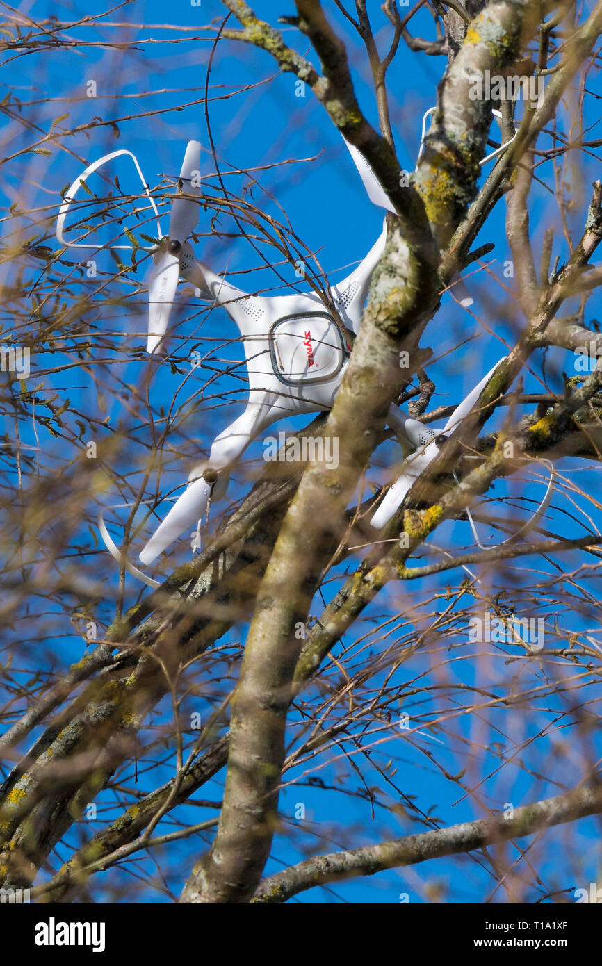 A Syma Drone Quadcopter crashed into the branches of a tree. - Stock Image