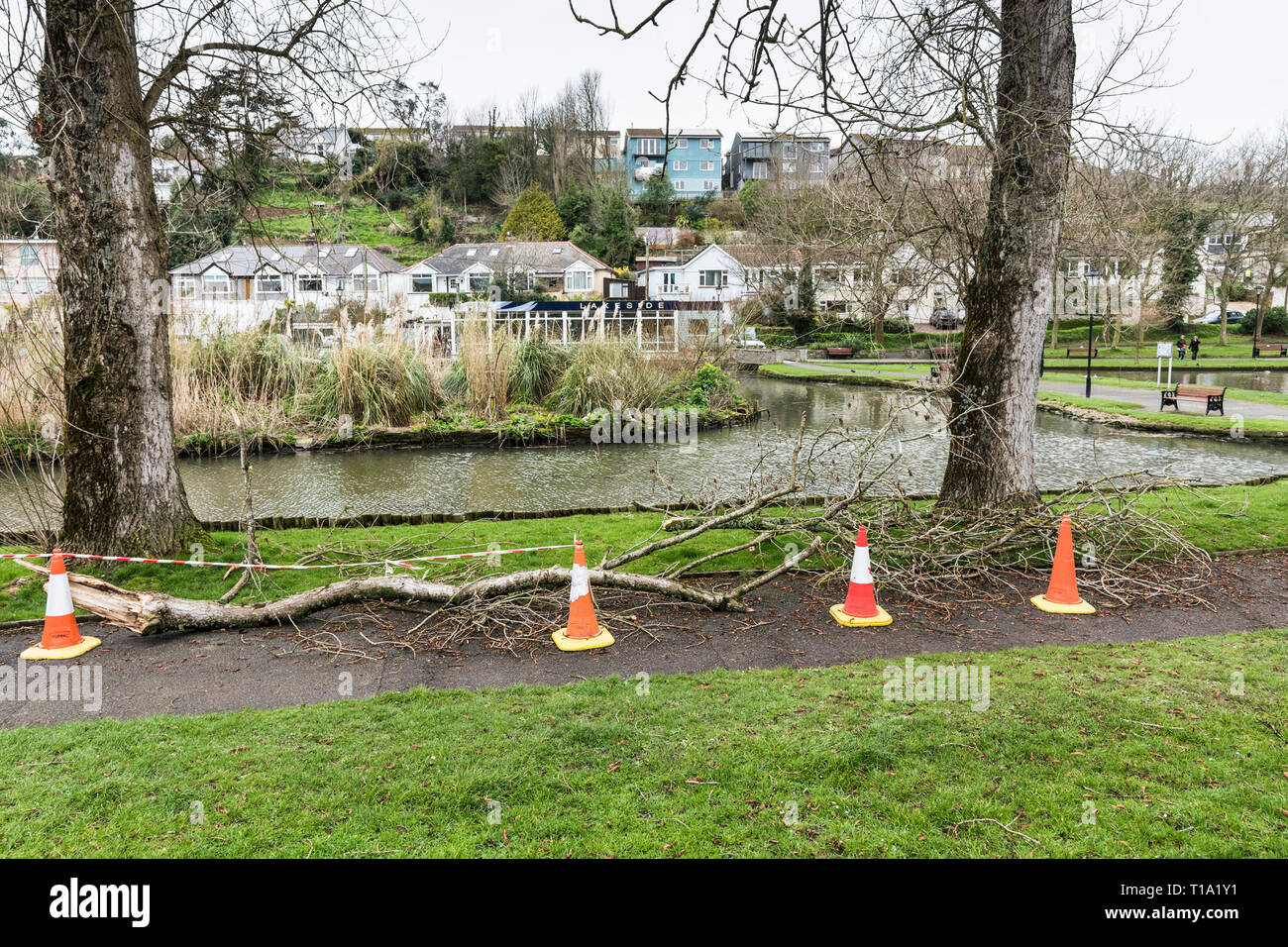 Cones used to cordon off fallen tree branches in Trenance Park in Newquay Cornwall. - Stock Image