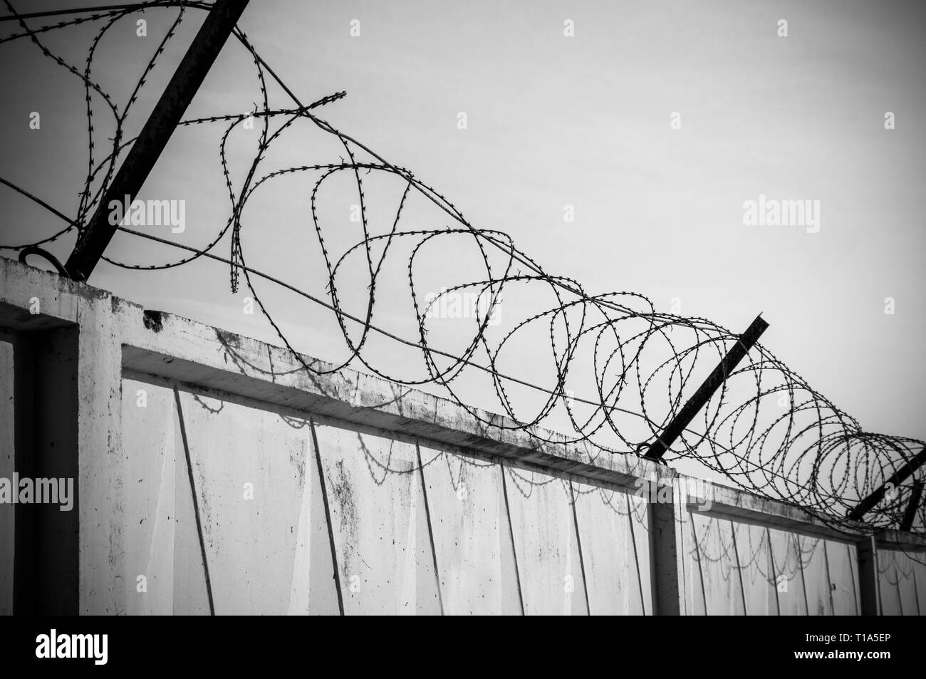 Concrete wall with razor barbed tape wire on blue sky background - Stock Image