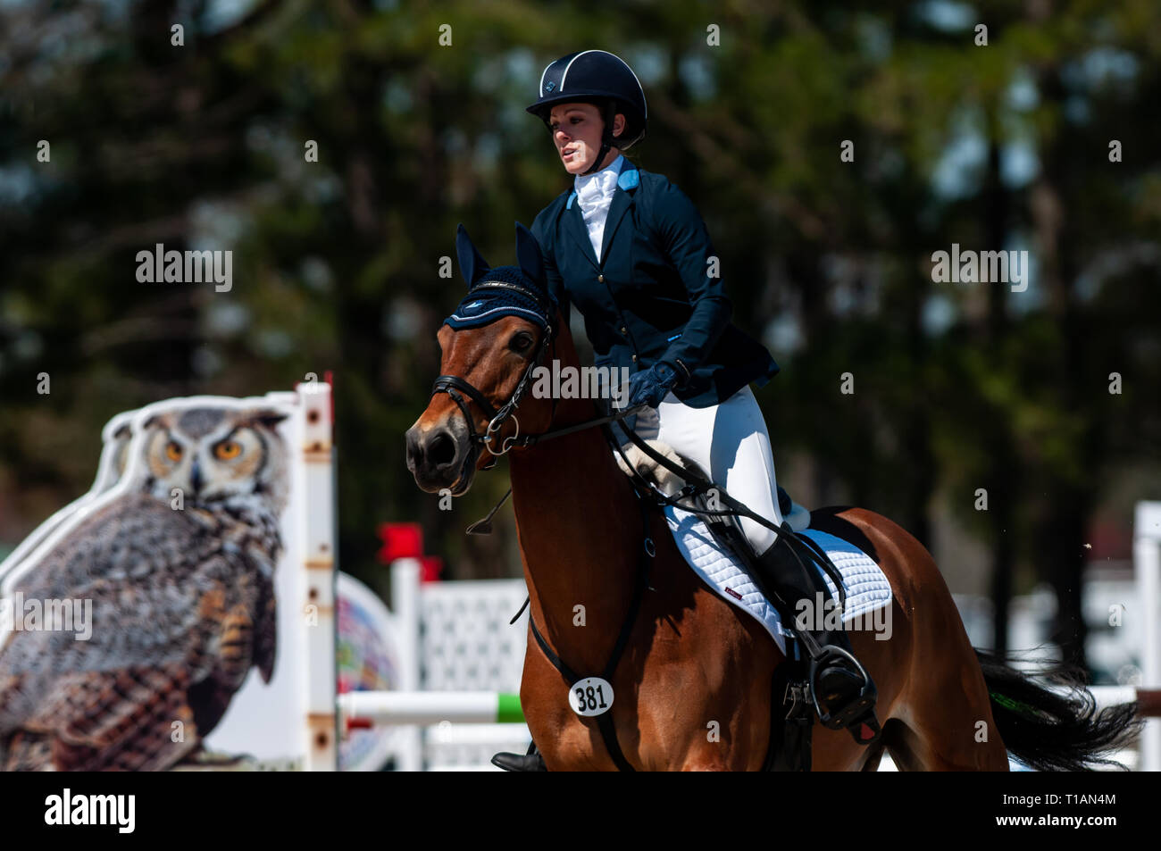 Raeford, North Carolina, USA. 24th Mar, 2019. March 24, 2019 - Raeford, N.C., USA - KRISSY SMITH SHELLENBERGER of the United States riding LOUGHNATOUSA MAC competes in the Training Rider division show jumping at the sixth annual Cloud 11-Gavilan North LLC Carolina International CCI and Horse Trial, at Carolina Horse Park. The Carolina International CCI and Horse Trial is one of North America's premier eventing competitions for national and international eventing combinations, hosting International competition at the CCI2*-S through CCI4*-S levels and National levels of Training through Advan - Stock Image