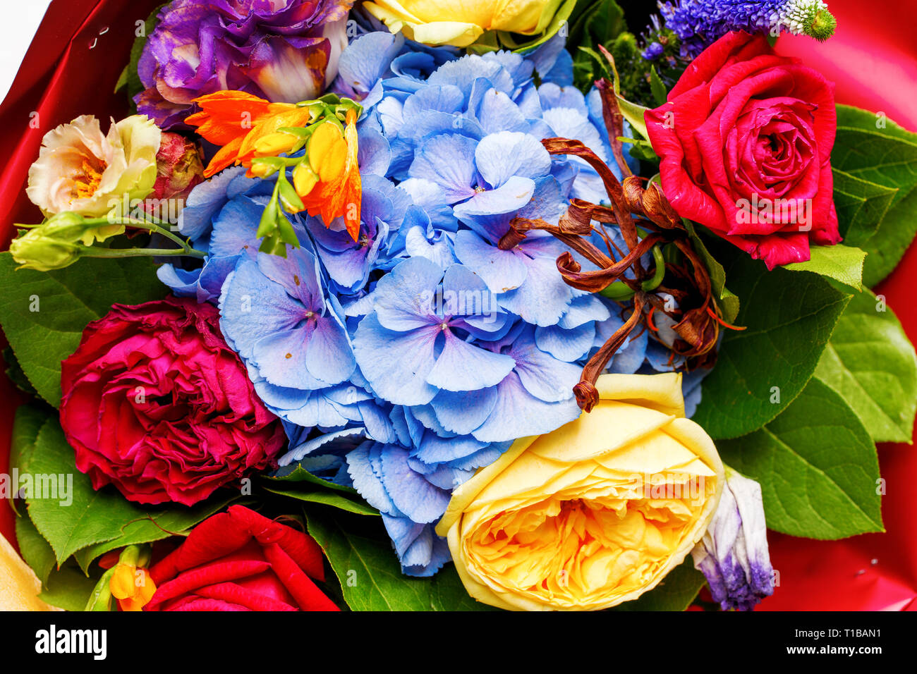 Close-up photo ofp bouquet of multi-colored roses. Stock Photo