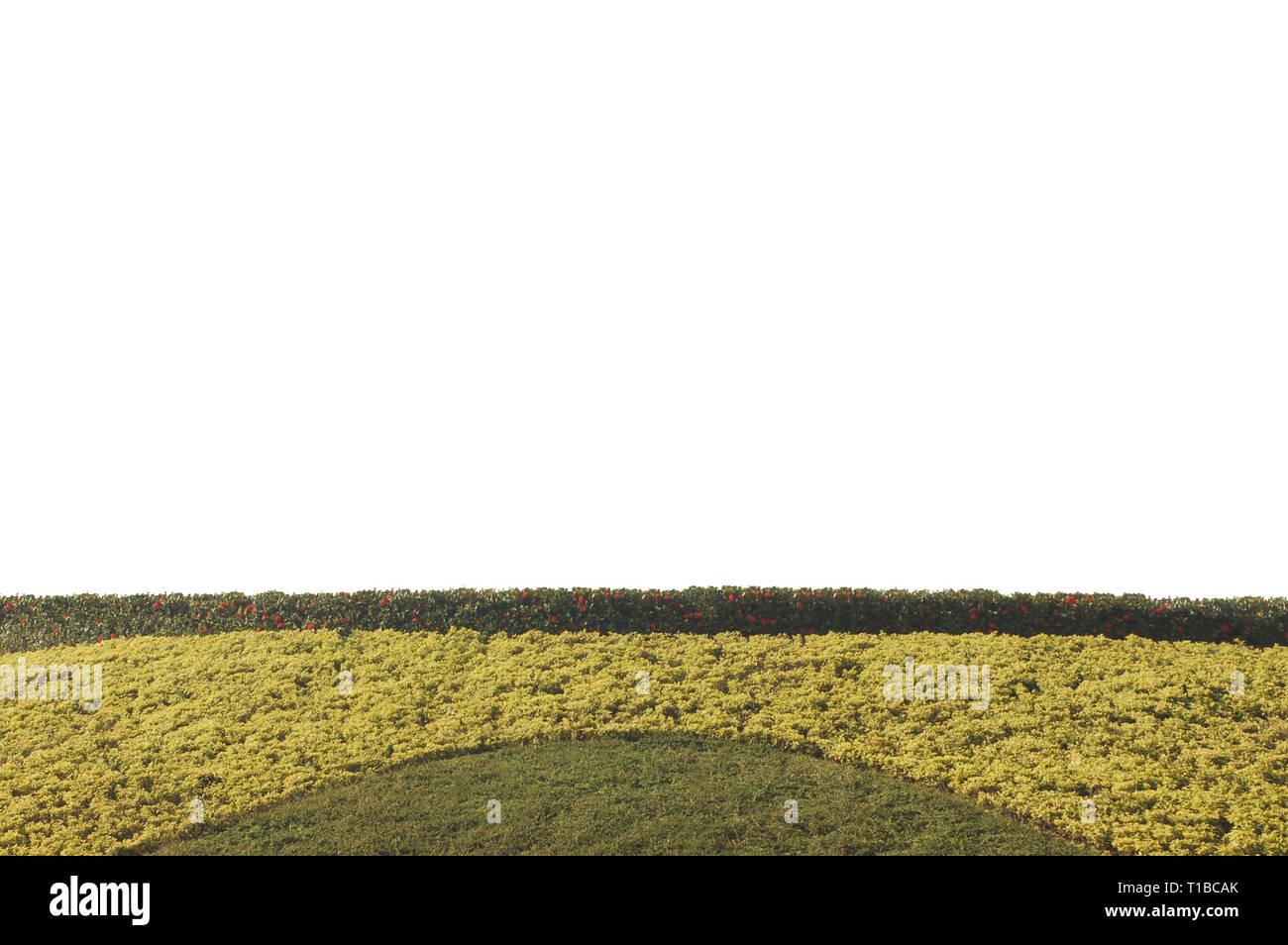 Topiary Wall Art High Resolution Stock Photography And Images Alamy