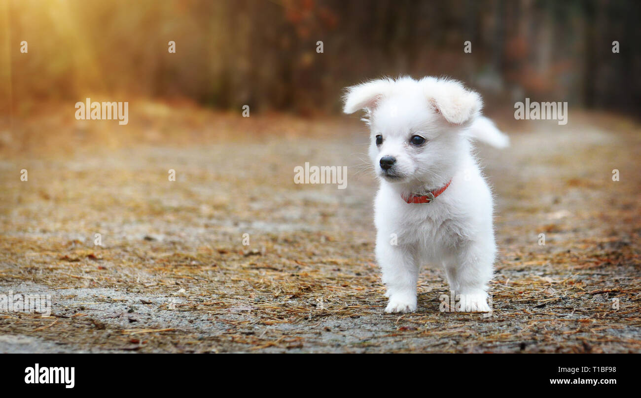 Pretty little puppy on forest path - Stock Image