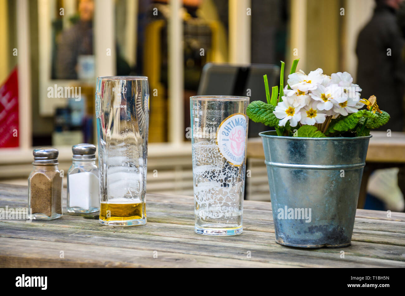 Empty pint glasses, salt, pepper and a polyanthus plant in a pot. - Stock Image