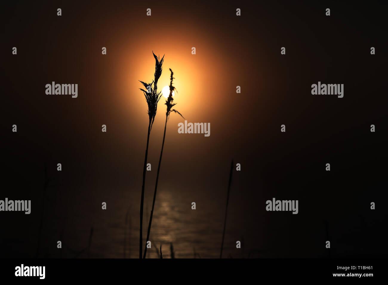 MOTALA 20180121 Vass i ljuset av solen. Foto Jeppe Gustafsson - Stock Image