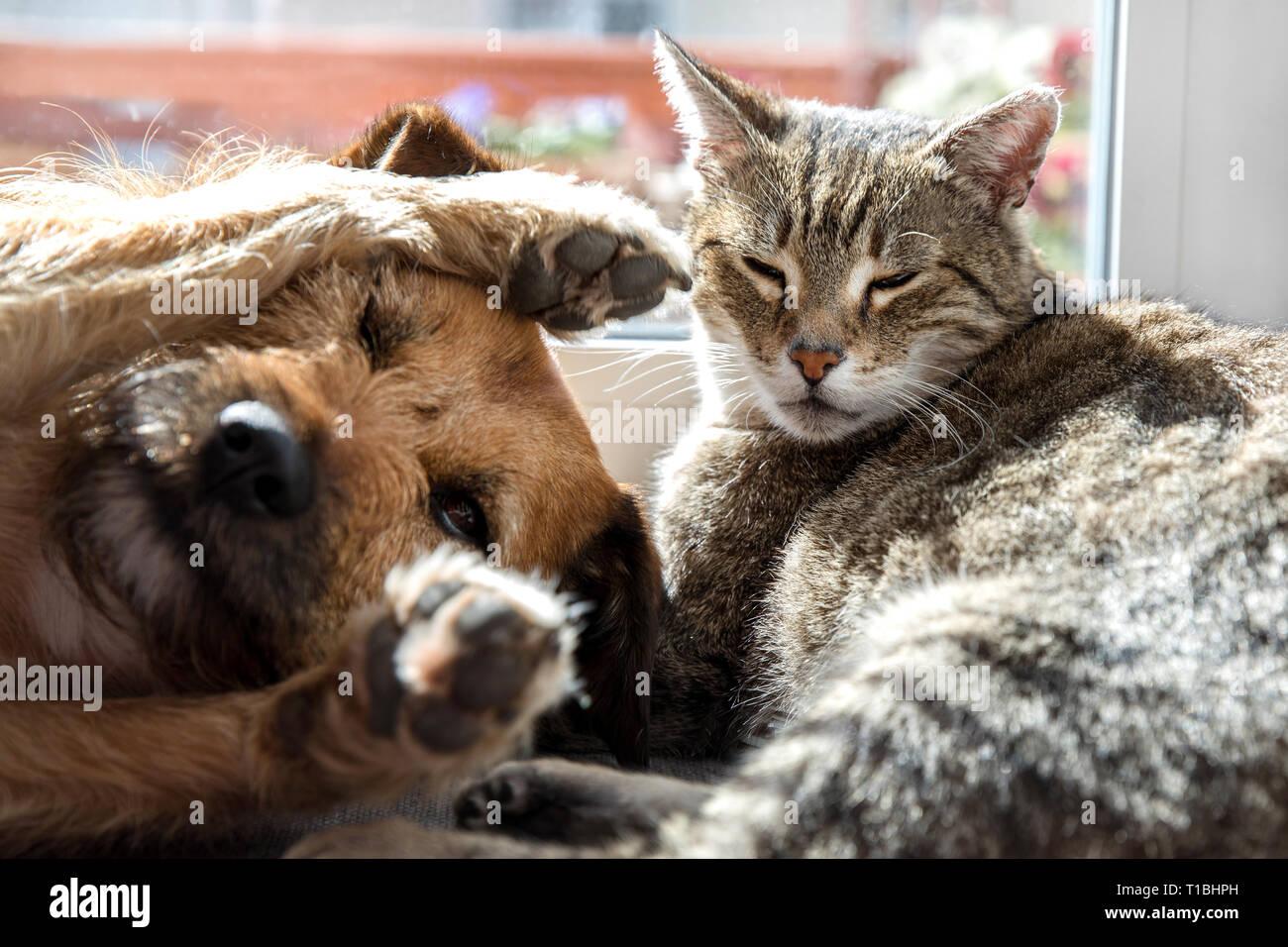 Cat with dog sleeping Stock Photo