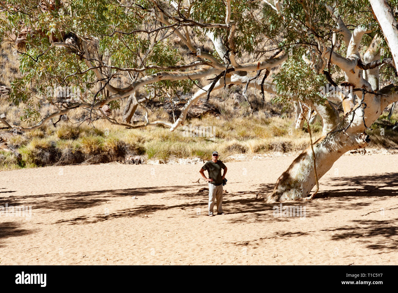 60 year old caucasian man stands under and ancient ghost gum at Simpsons Gap, Northern Territory, Australia - Stock Image