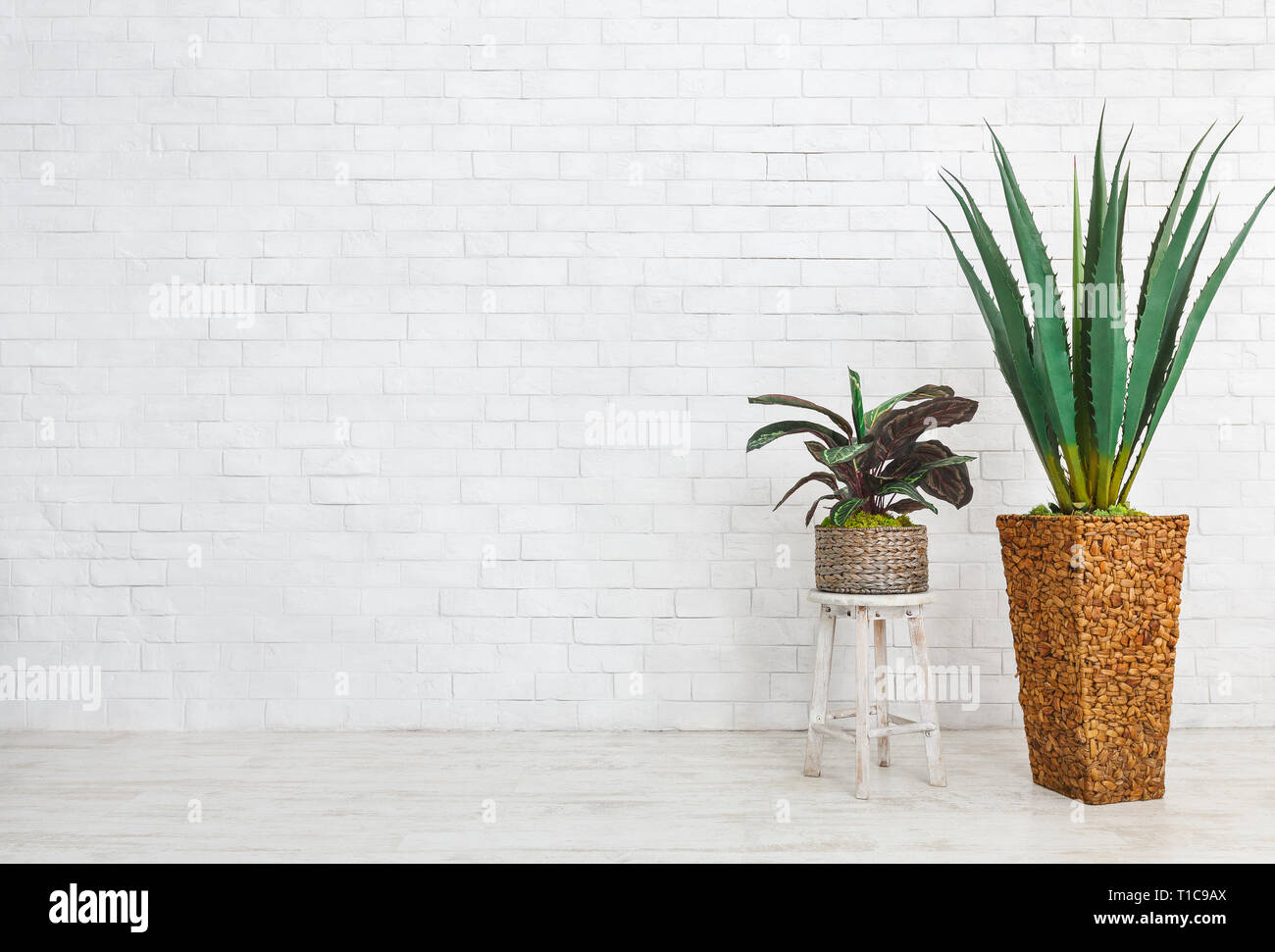 Home plants composition on white background, copy space - Stock Image