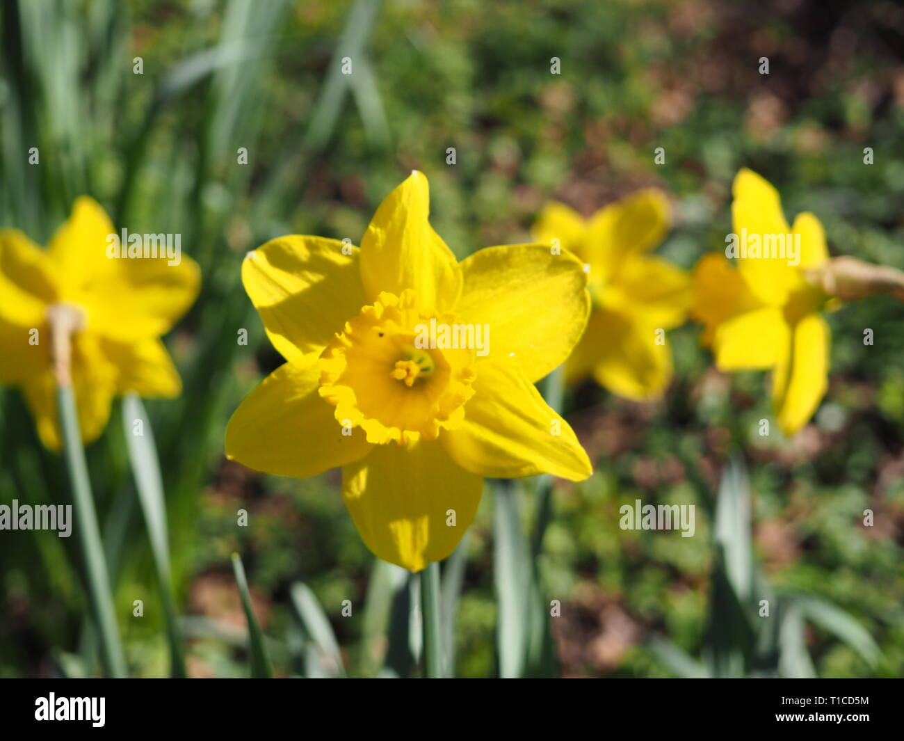 In Watford Stock Photos & In Watford Stock Images - Alamy