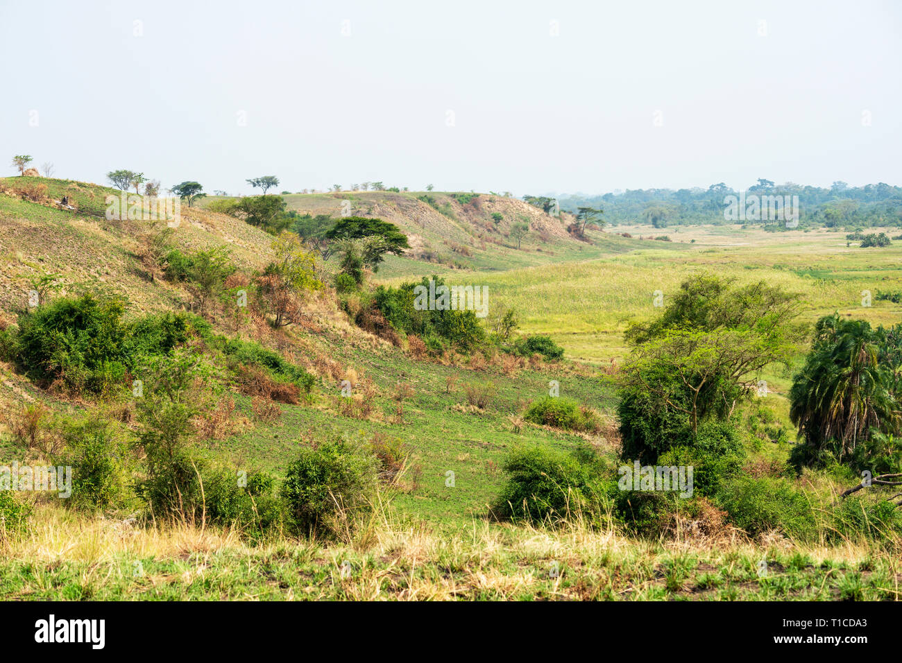Lush green landscape of Ishasha Sector of Queen Elizabeth National Park in South West Uganda, East Africa - Stock Image