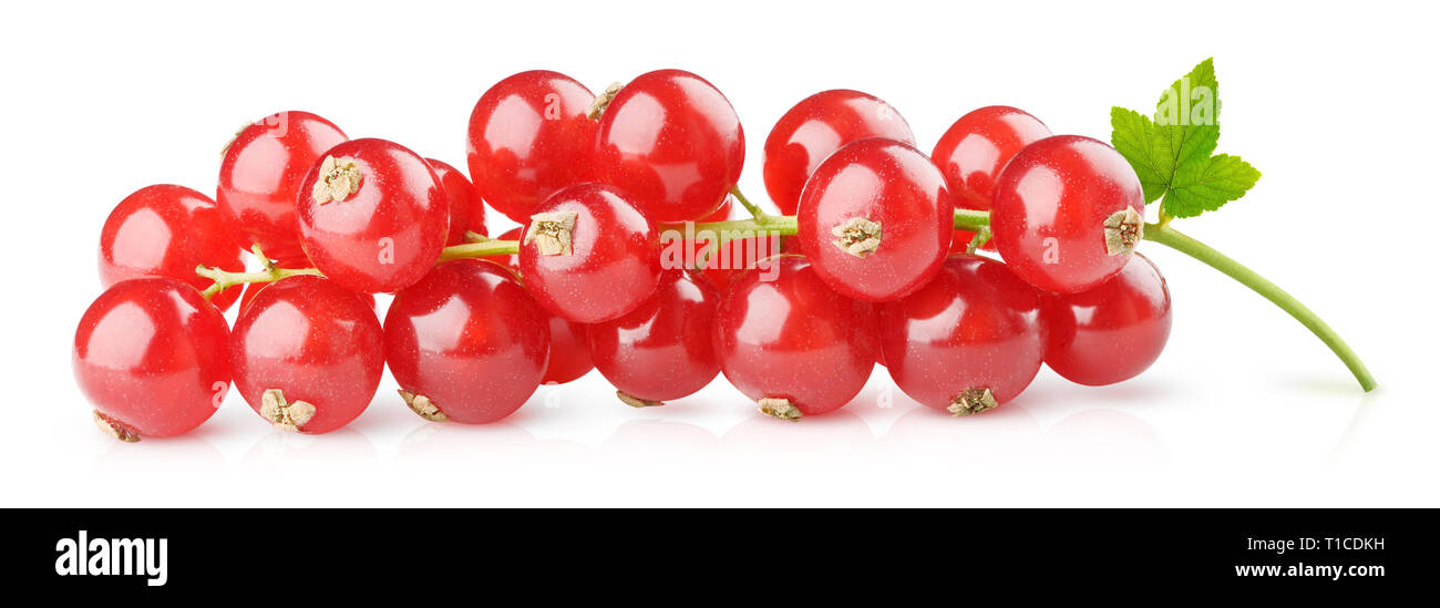Isolated berries. Red currants on a branch isolated on white background with clipping path Stock Photo