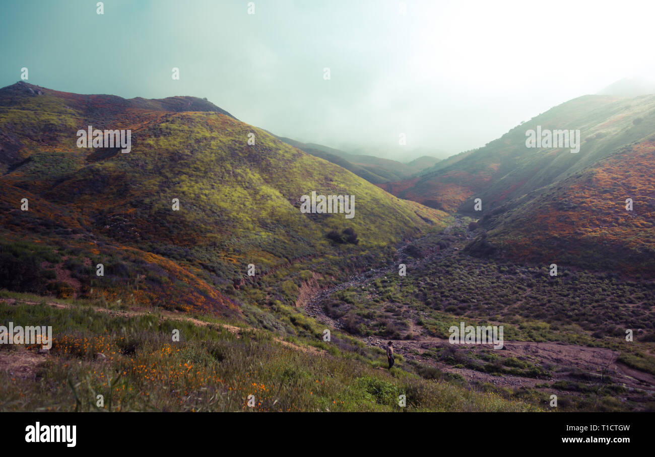 Wildflower super bloom in Lake Elsinore, California spring 2019 - Stock Image