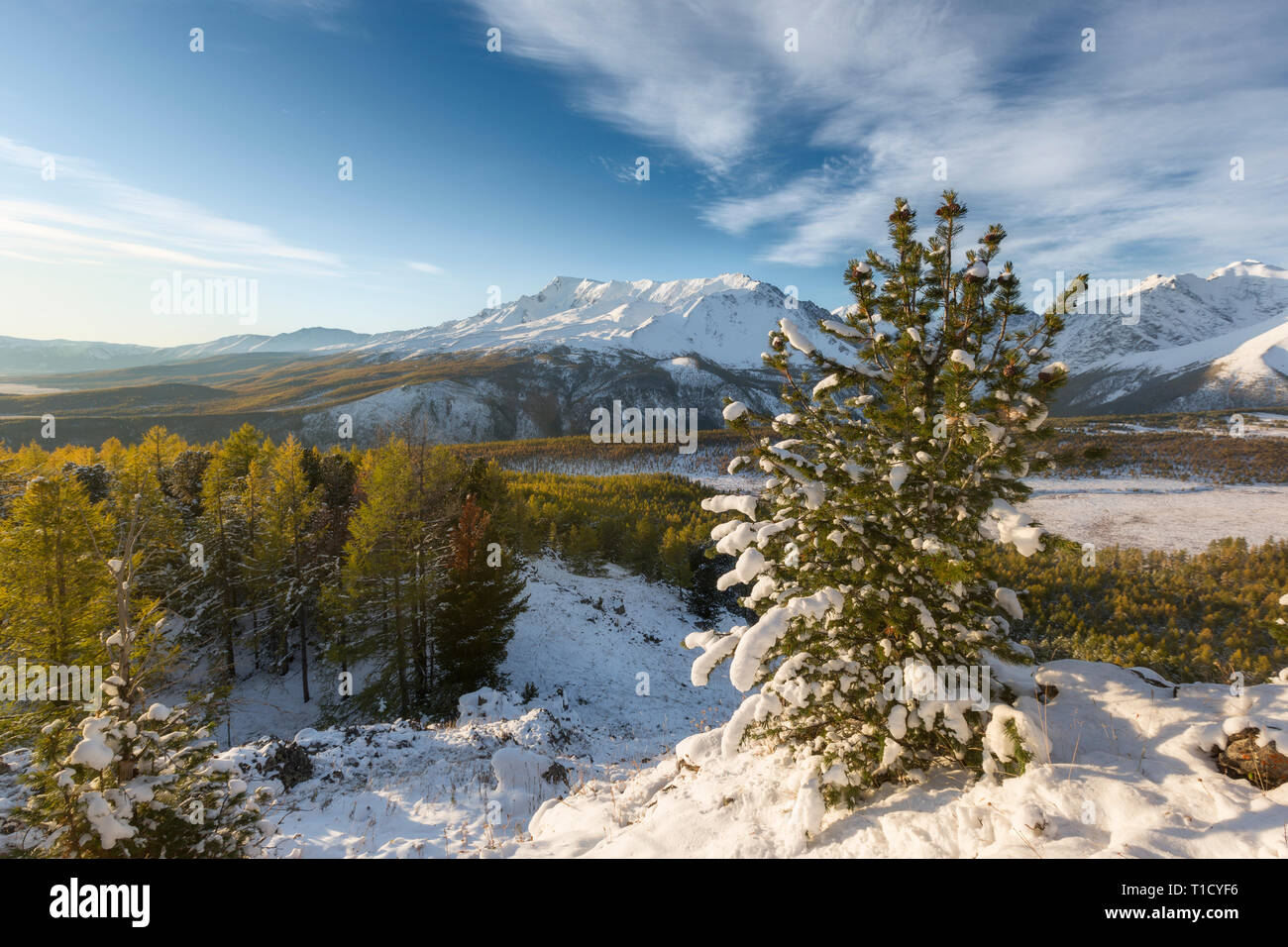 Majestic white spruces glowing by sunlight. Picturesque and gorgeous wintry scene. Alps ski resort. - Stock Image