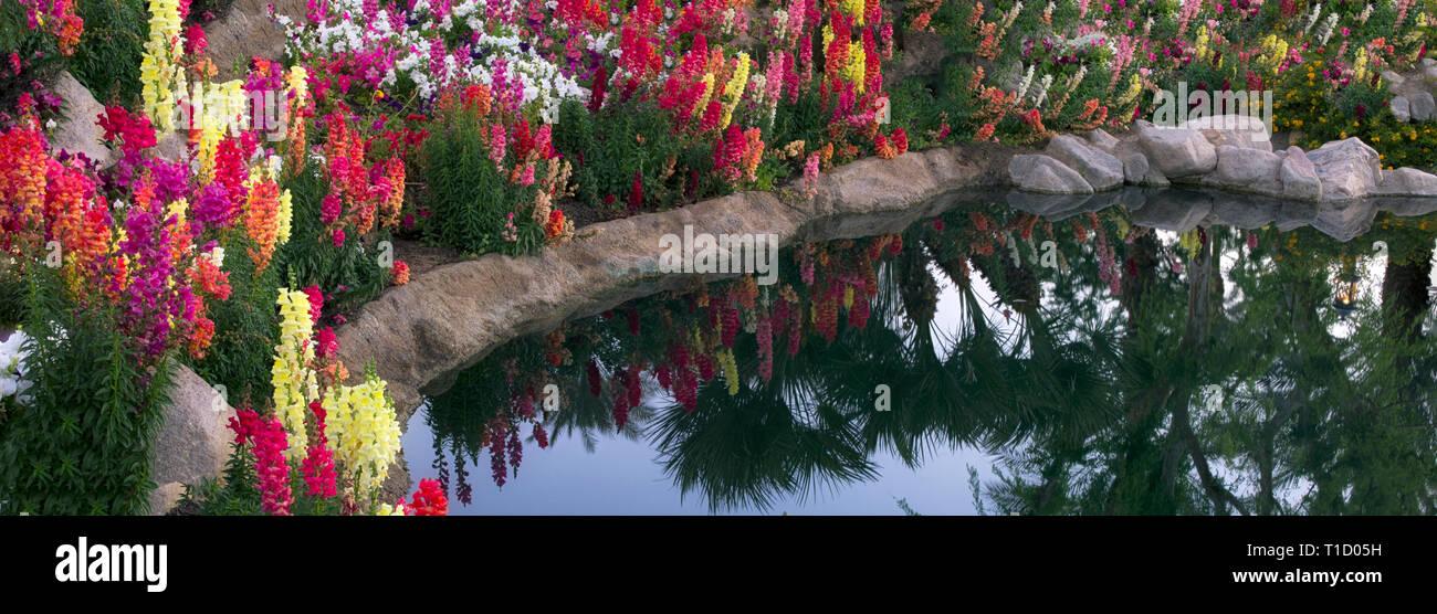 Flower garden at pond side. Palm Desert, California - Stock Image