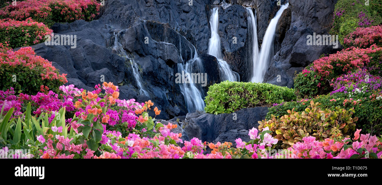 Bougainvillea flowers and waterfall at garden in Kauai, Hawaii - Stock Image