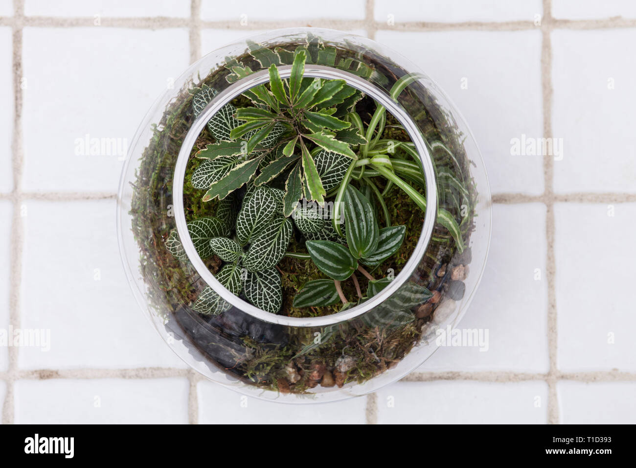 High Angle View Of Fish Bowl Terrarium On White Tile Stock Photo Alamy