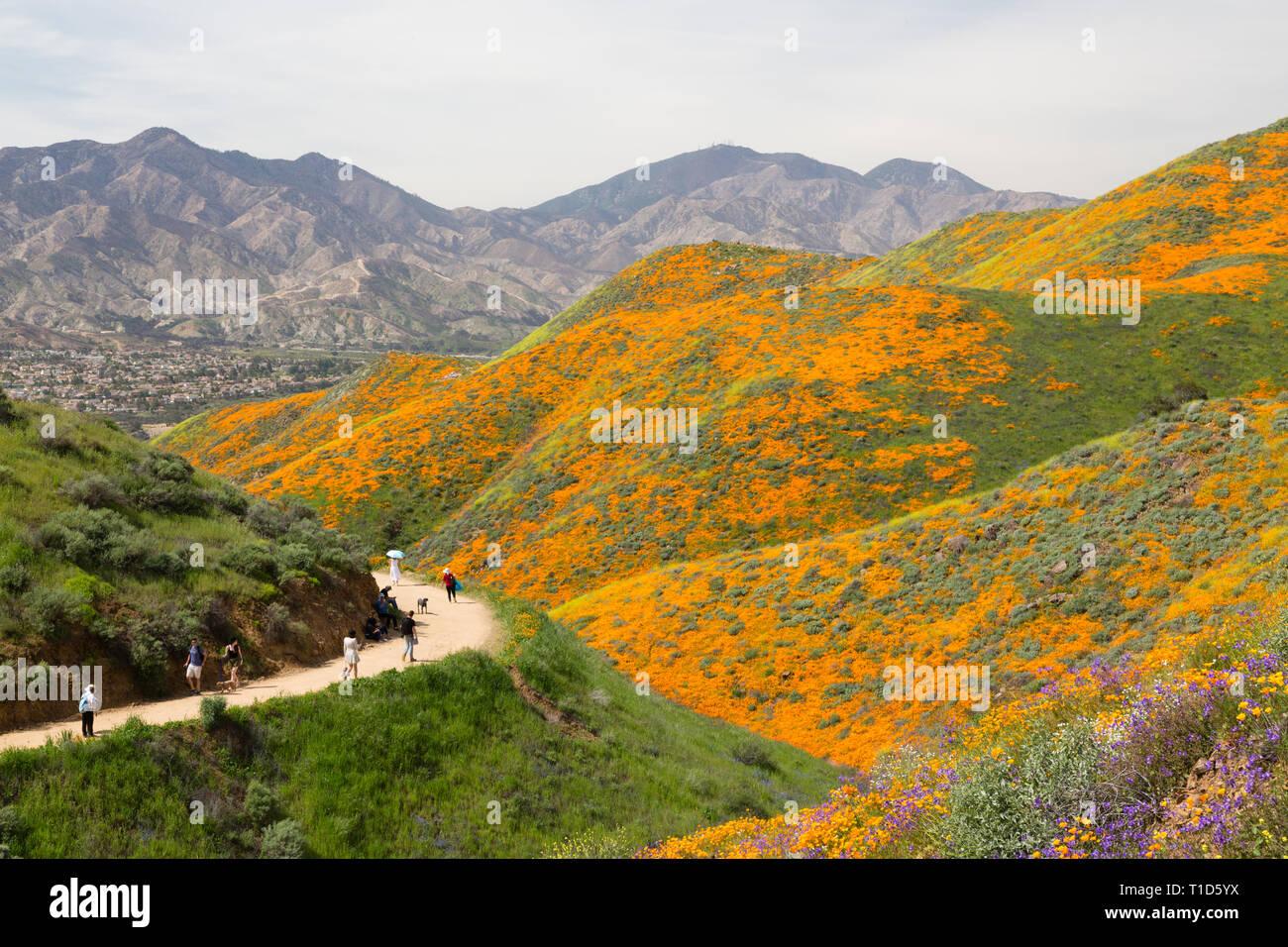 Trail through wildflower superbloom - Stock Image
