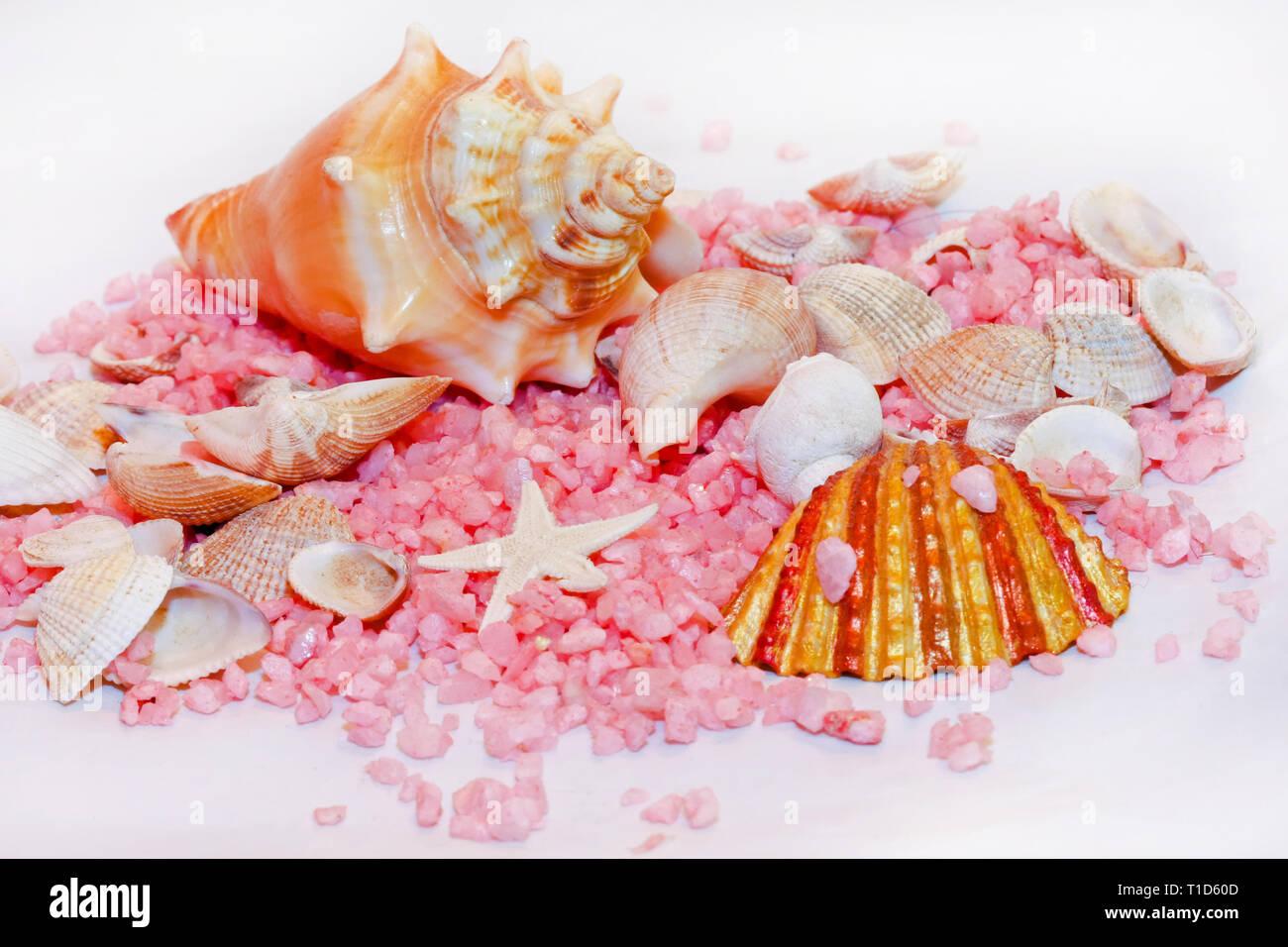 Seashells marine life decoration with pink stones - Stock Image