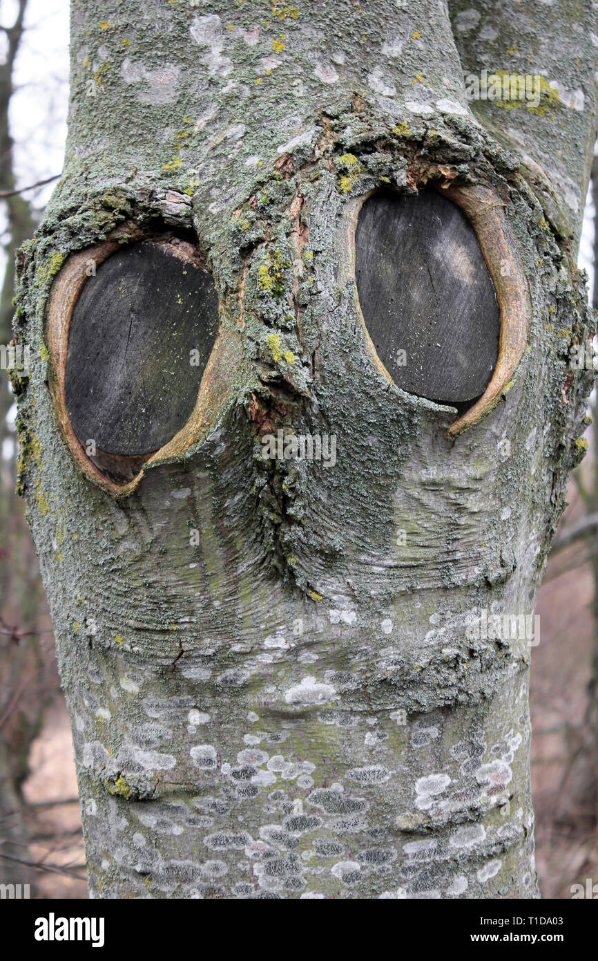 Tree Trunk With 'Owl Face' - the eyes formed from two branch scars Stock Photo