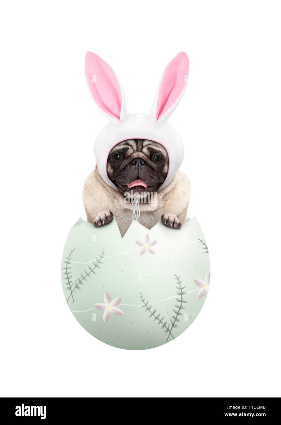 funny cute  pug puppy dog wearing bunny ears, sitting in pastel green easter egg, isolated on white background Stock Photo