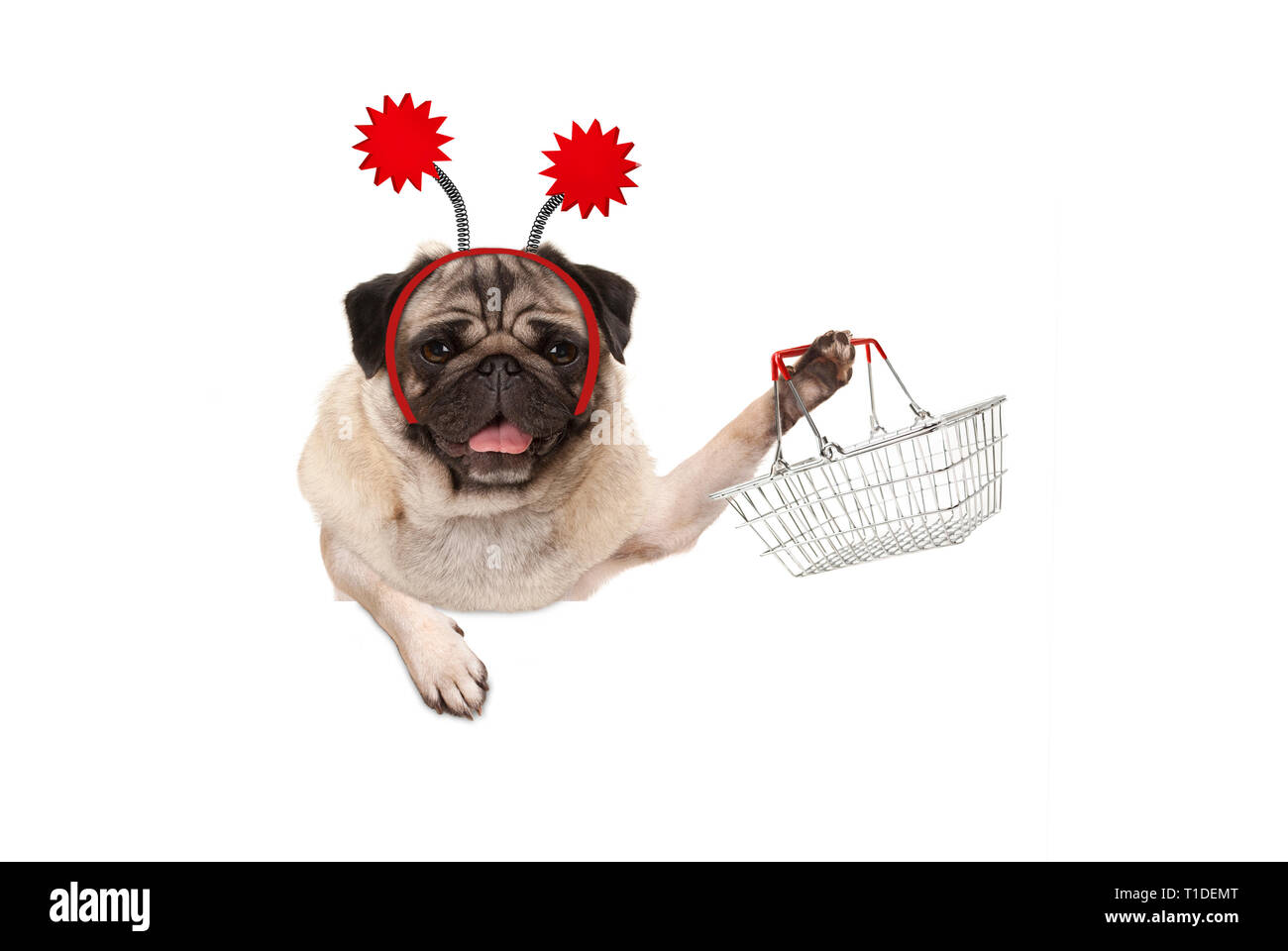 happy smiling pug puppy dog holding up wire metal shopping basket, wearing red diadem, isolated on white background Stock Photo