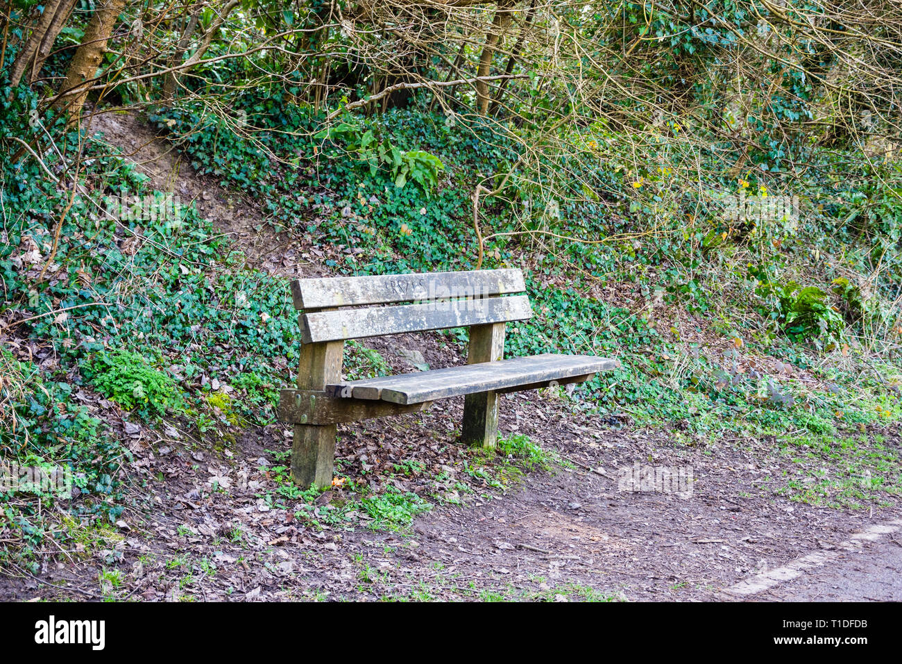 A seating bench made of wood with early spring growth and ivy on the bank behind and last years leaflitter on the floor next to a country path. Stock Photo