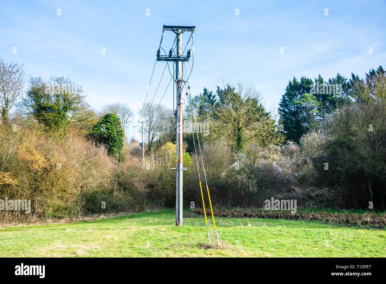 The end of a row of wooden powerline poles with lines running into the ground after being carried through a break in trees Stock Photo