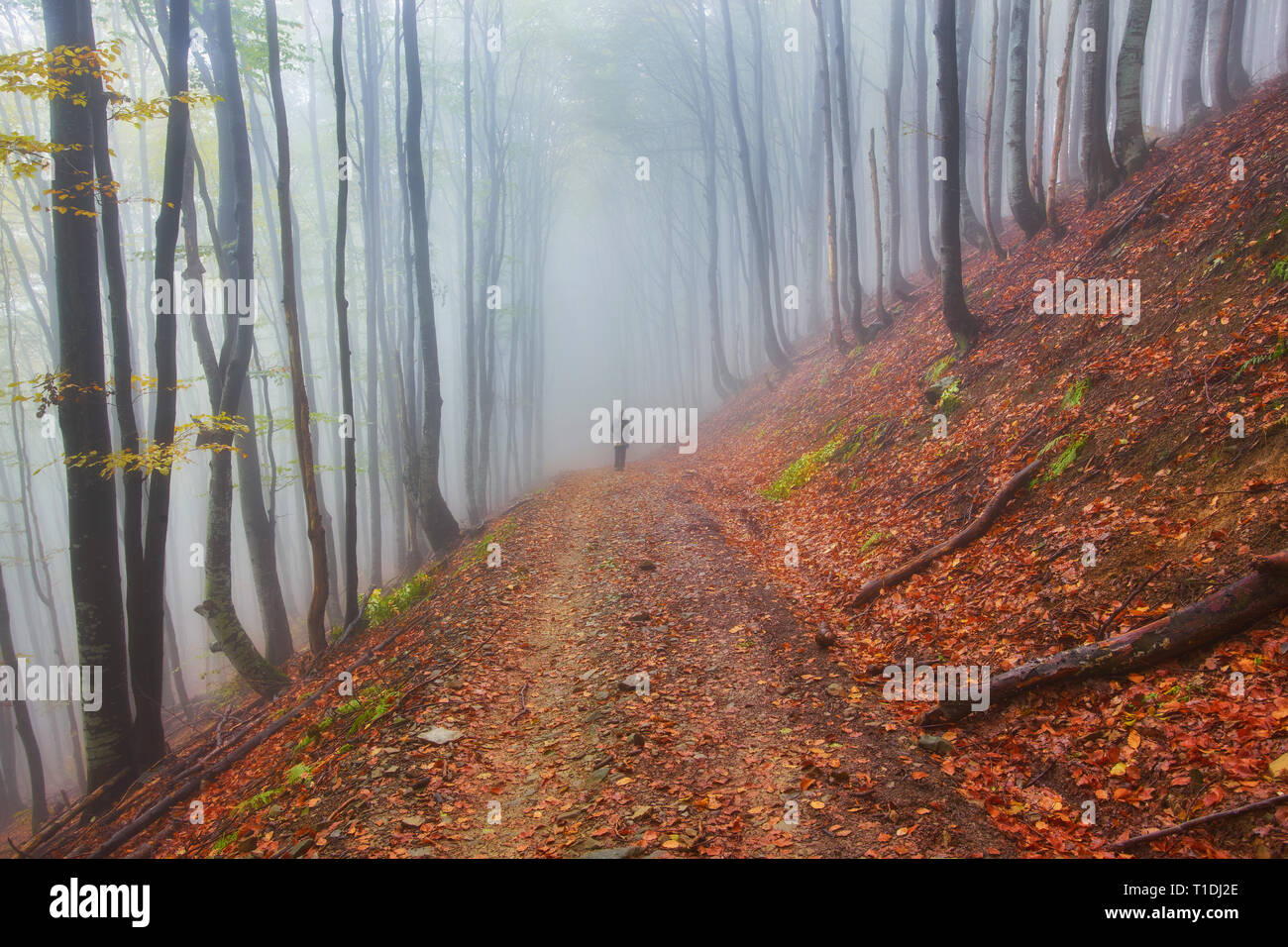 Forest trail in the mountains on a misty autumn day. - Stock Image