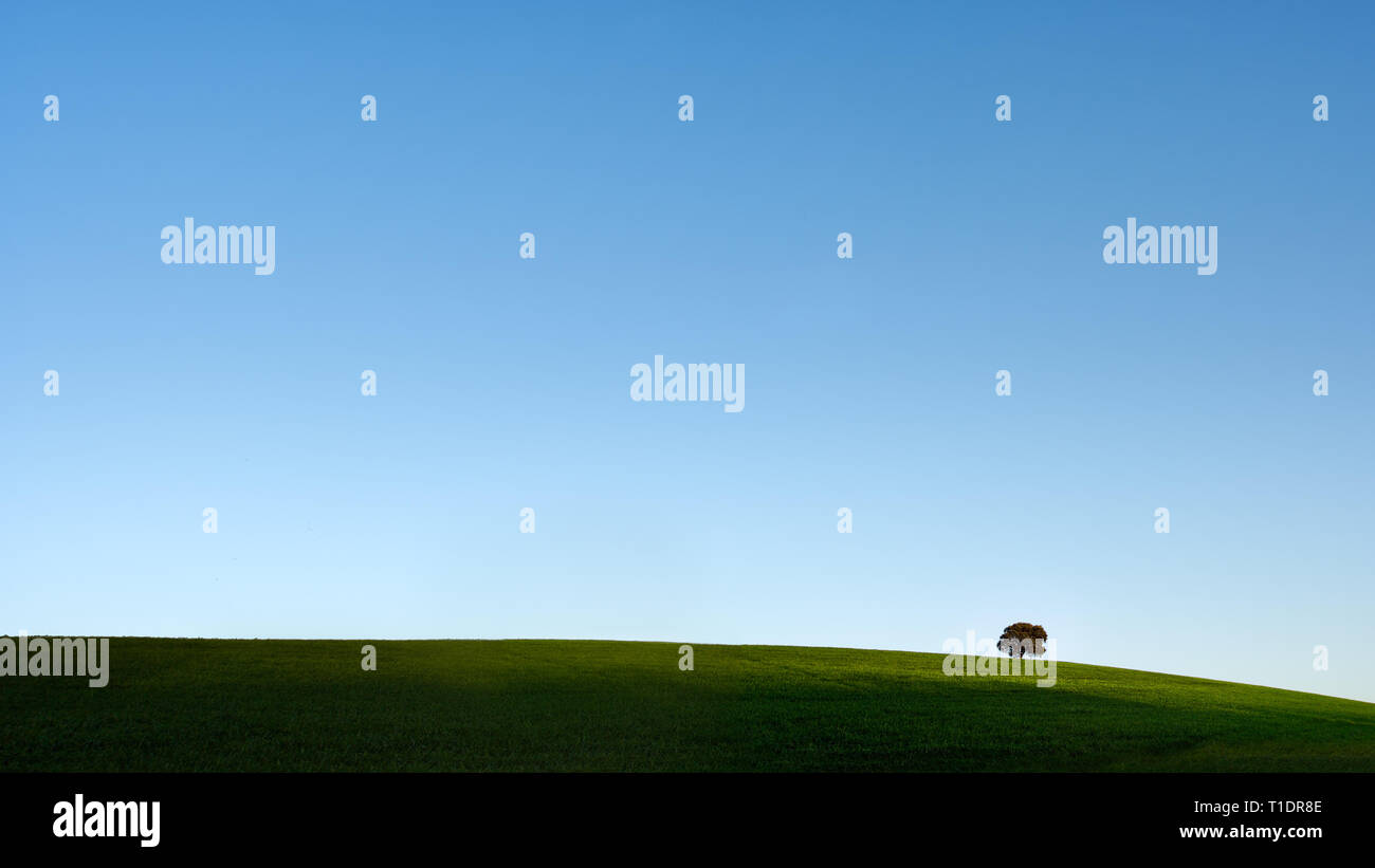 Typical Alentejo landscape (south of Portugal) with his vast spring green plain, deep blue sky and a oak tree on the horizon - Stock Image