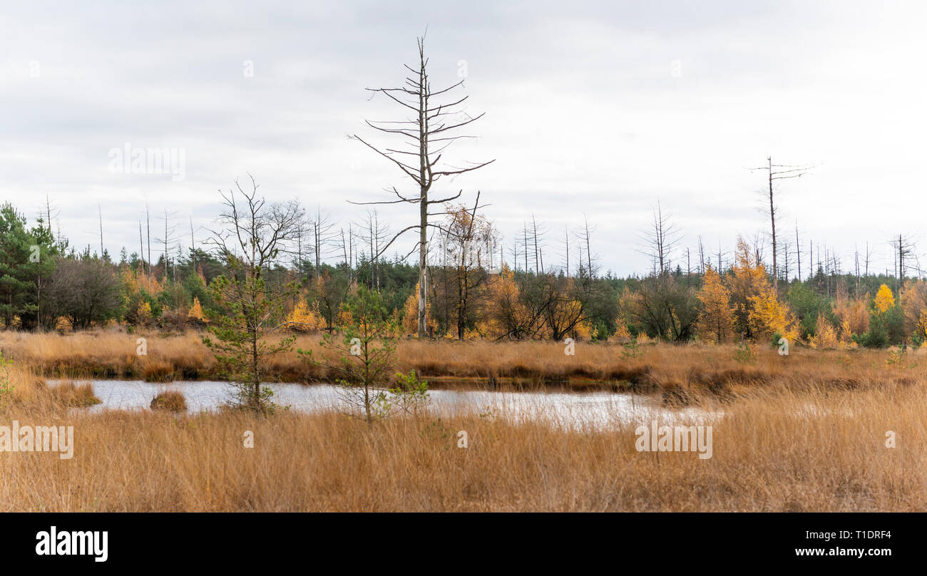 Small lake in autumn with dead trees in National Park Dwingelderveld in the province of Drenthe, The Netherlands. - Stock Image