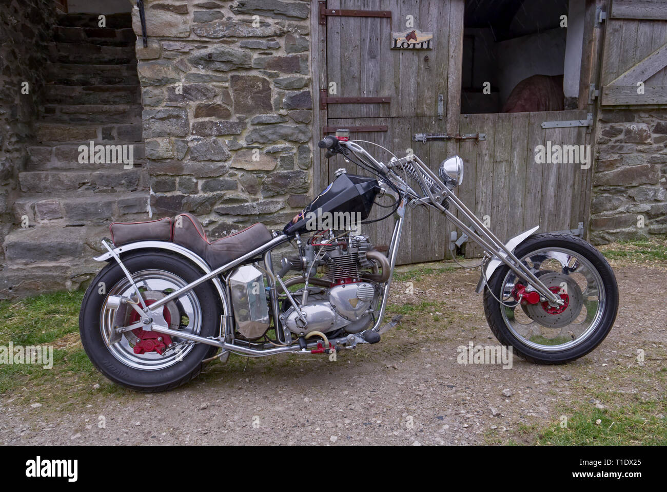 Custom chopper motorcycle, Triumph 750cc Bonneville parked near an old stone built stable on a farm in North Wales. - Stock Image