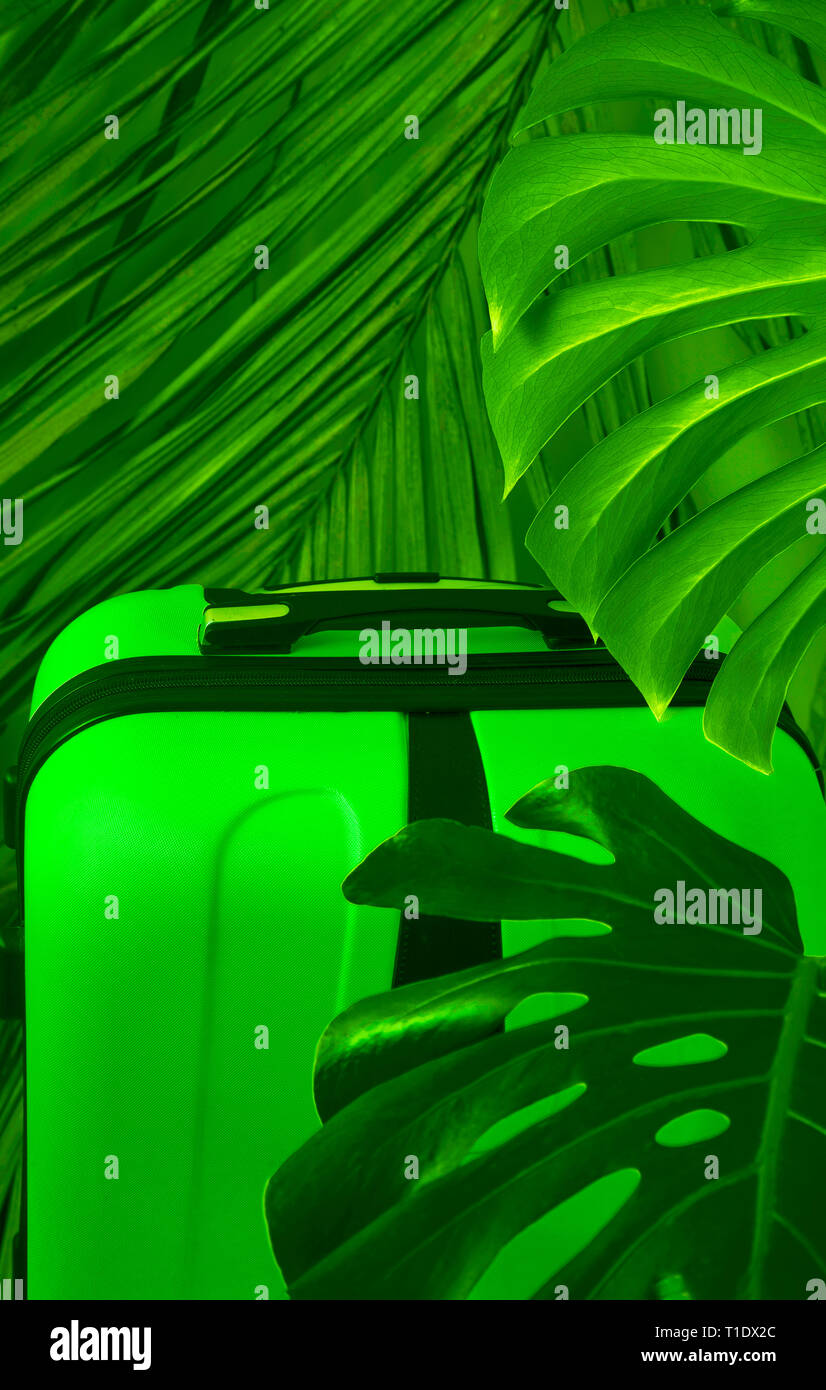 Green travel suitcase with green tropical leaves. A plant monstera with a large luggage bag for travel. - Stock Image