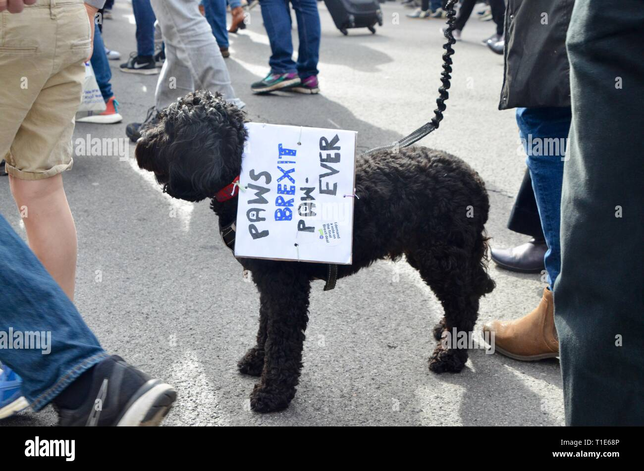 scenes from the anti brexit pro peoples vote march in london 23rd march 2019 paws brexit paw ever dog - Stock Image