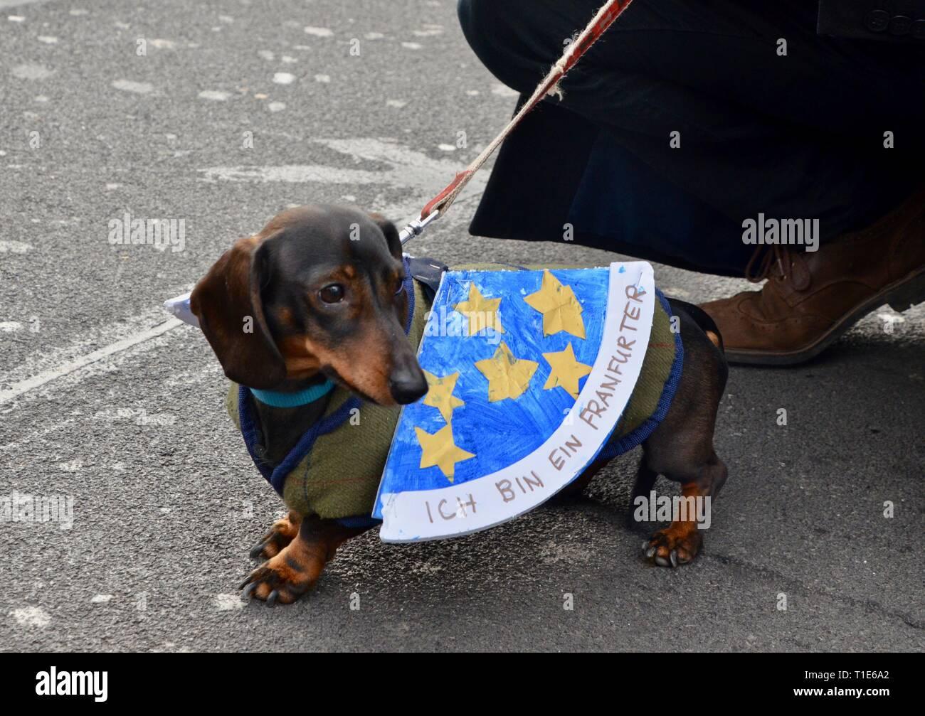 scenes from the anti brexit pro peoples vote march in london 23rd march 2019 daschund dog ich bin ein frankfurter - Stock Image