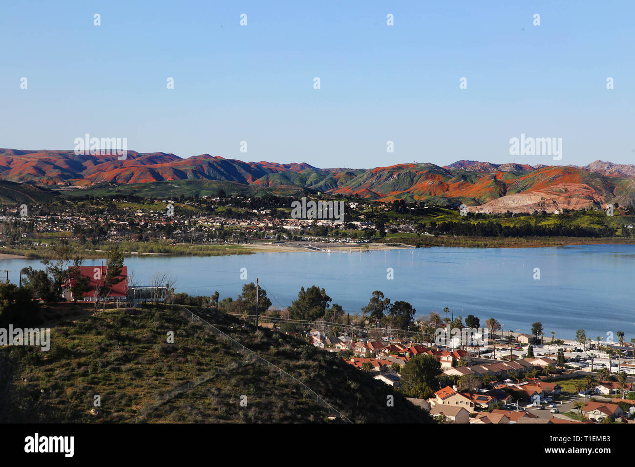 Lake Elsinore, California, USA. 16th Mar, 2019. This spring, the conditions after last year's devastating wildfires in southern California and some unusually heavy rainfall have created the perfect storm for a wild flower super bloom. The Walker Canyon poppy bloom is so vibrant, it can be seen from Los Angeles International Airport flights 30,000 feet up in the air - it even makes an appearance in satellite photos. Credit: Katrina Kochneva/ZUMA Wire/Alamy Live News - Stock Image