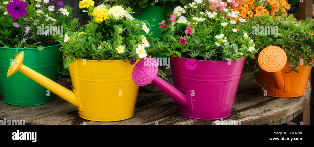 Flower variety growing in watering can display. Al's Gardens. Sherwood, Oregon - Stock Image