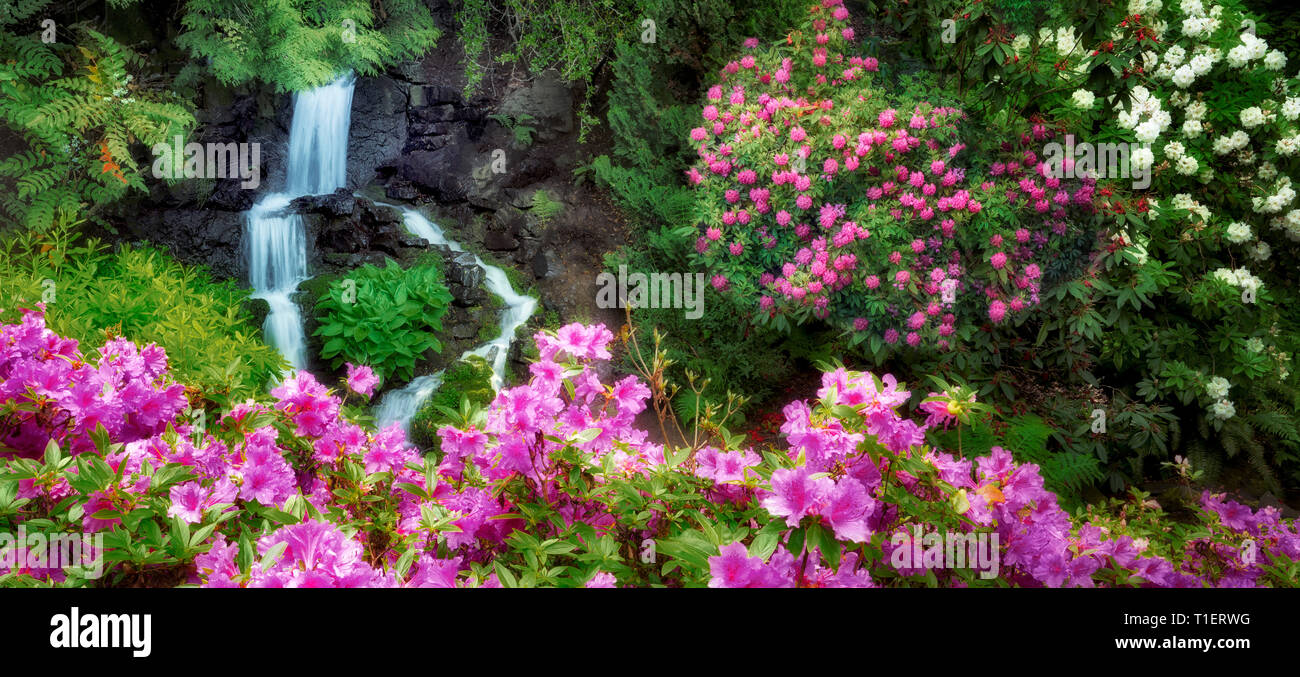 Rhododenrons and waterfall.  Crystal Springs Rhododendron Gardens, Oregon - Stock Image
