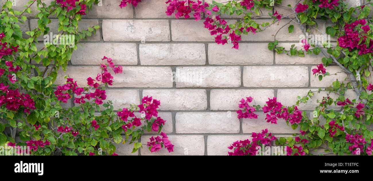 Close up of wall with blooming bougainvillea. Palm Spprings, California,heart shaped,heart - Stock Image