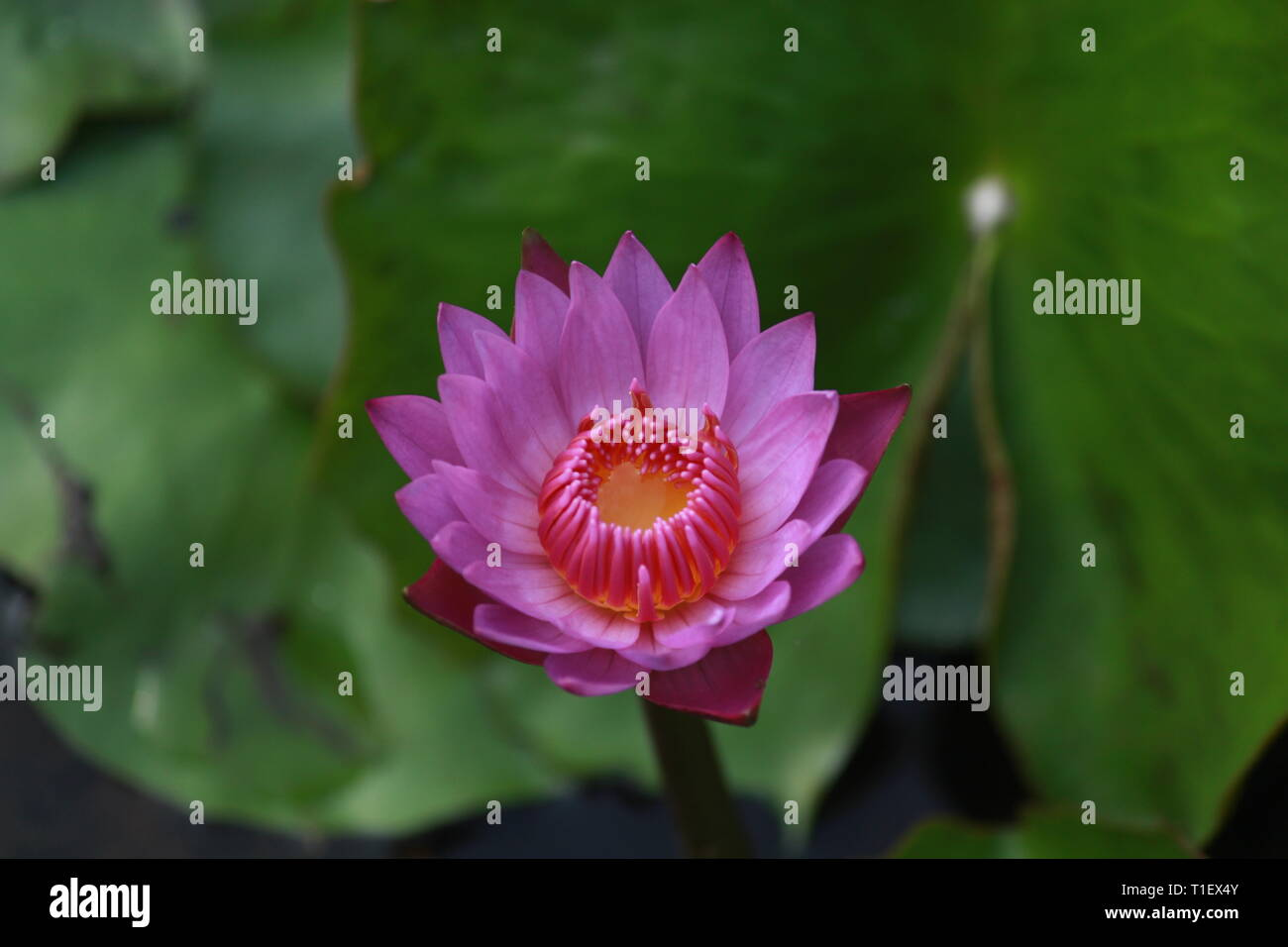 Bjp Stock Photos Bjp Stock Images Page 9 Alamy