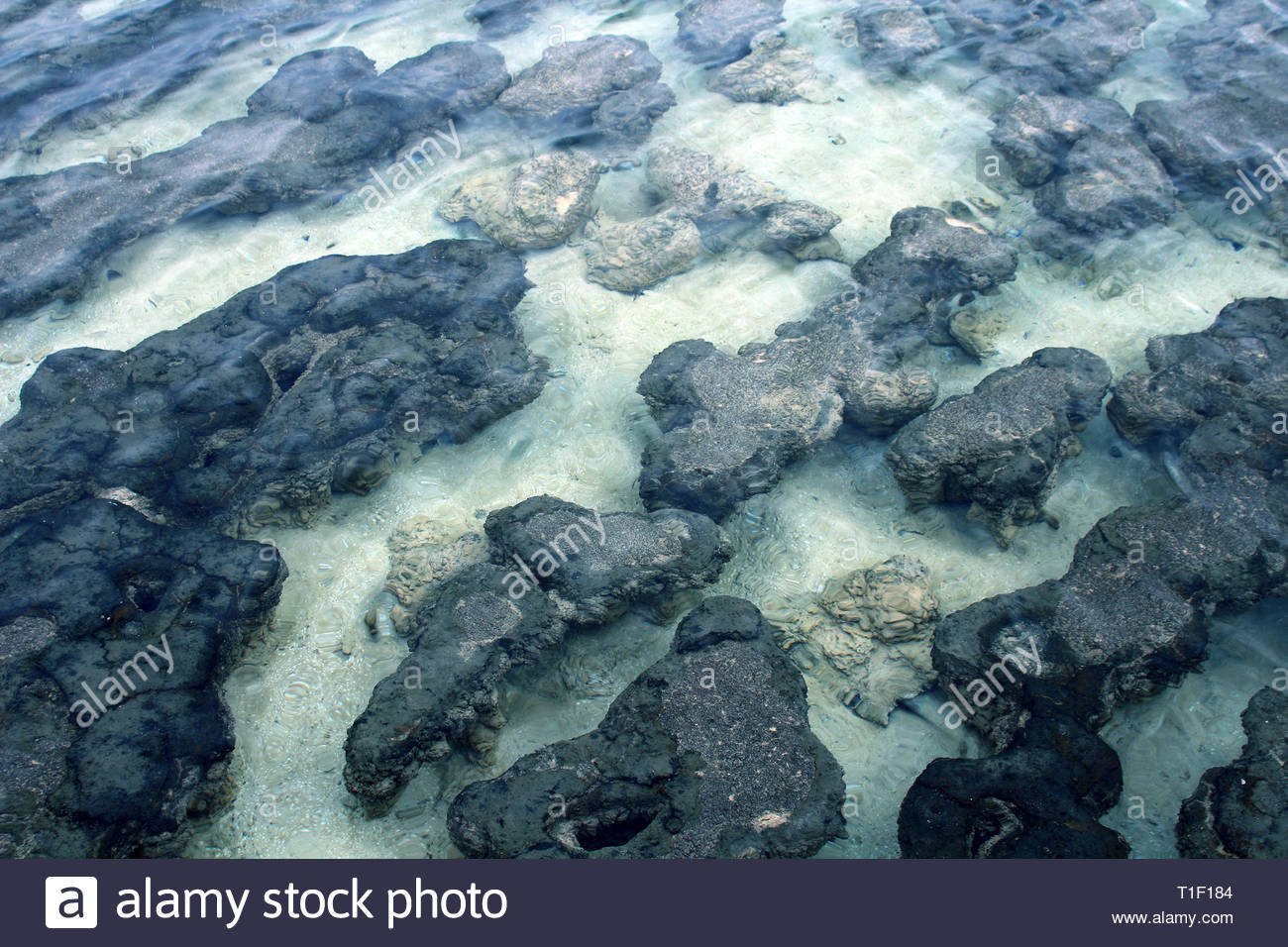 Natural texture formed by the stromatolites of Hamelin Pool, Western Australia - Stock Image