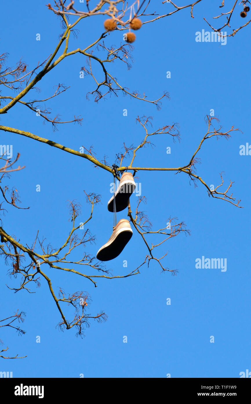 Pair of training shoes high up in a tree; England, UK - Stock Image