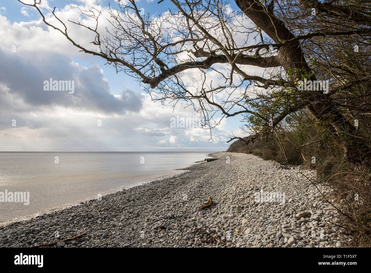 Sun shines from between clouds onto the long, quiet, pebble beach, backed by bare trees, at Porthkerry, Barry, South Wales - Stock Image