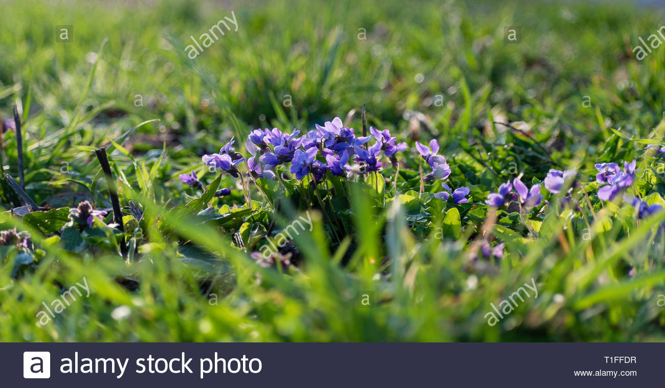 Flowers in the field - Stock Image