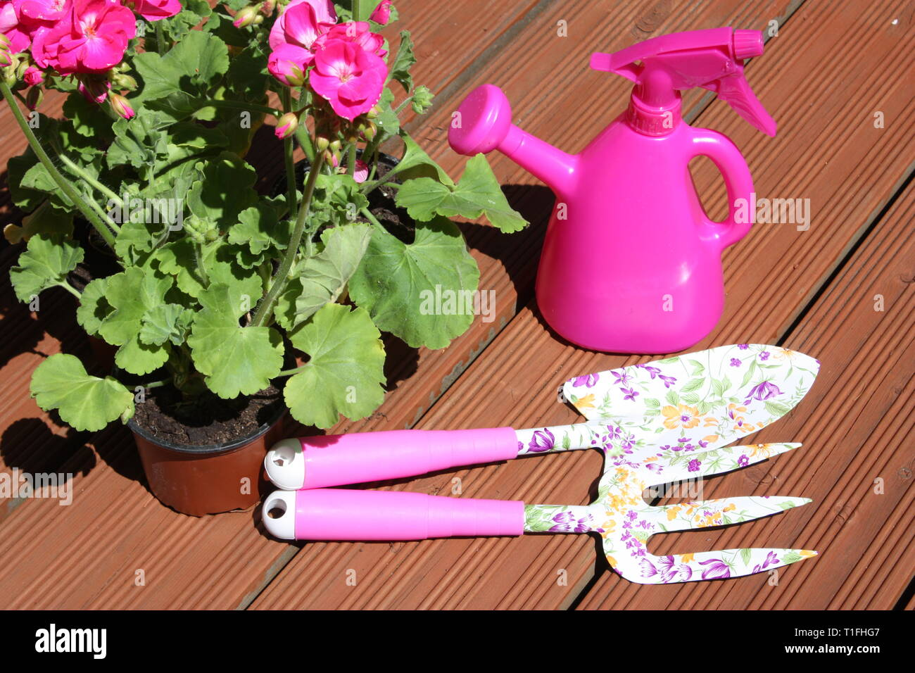 Pink geranium flowering plants with garden tools Stock Photo