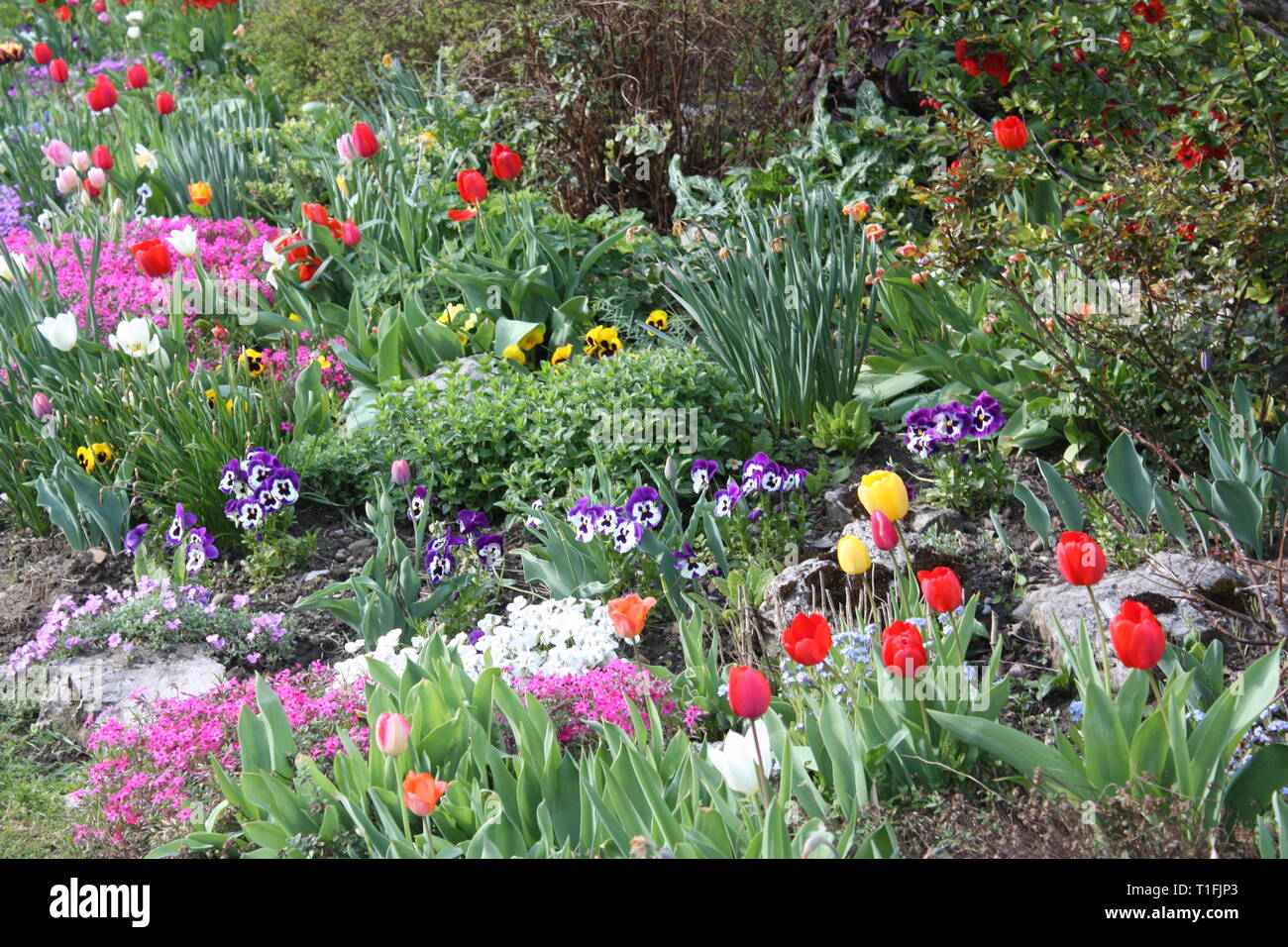Colourful spring flowers Stock Photo