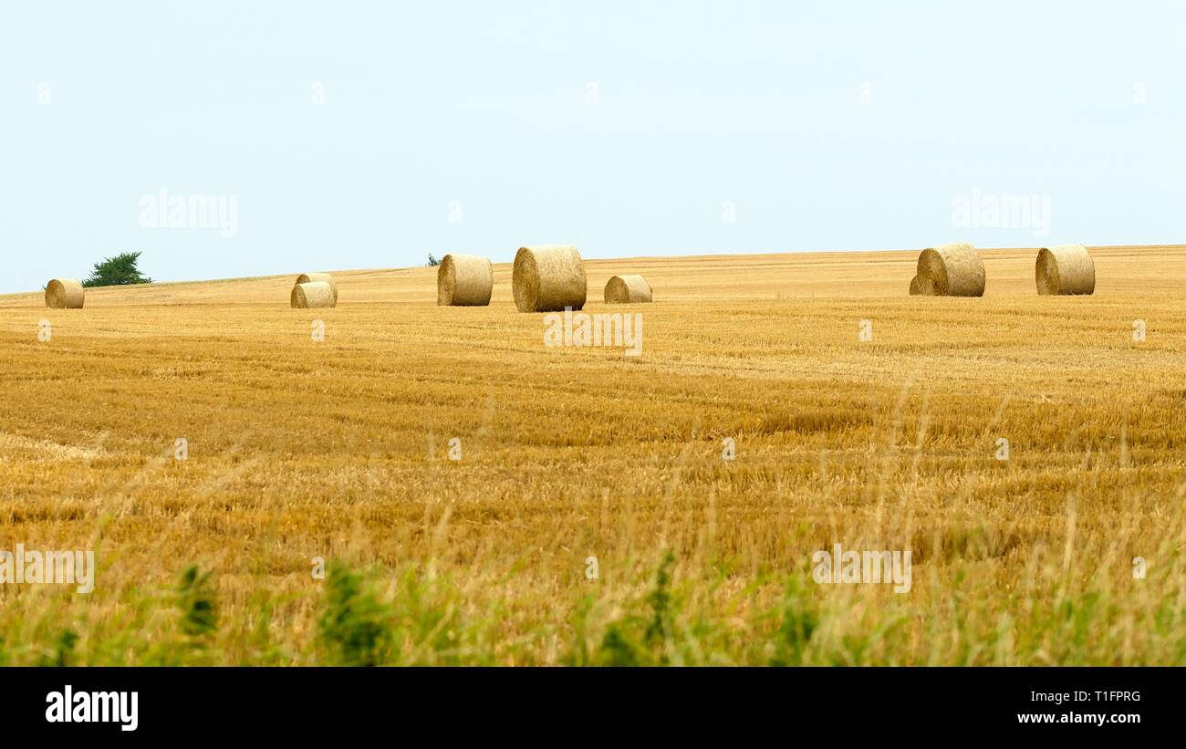 Stubbled field with several rolled haybales - Stock Image