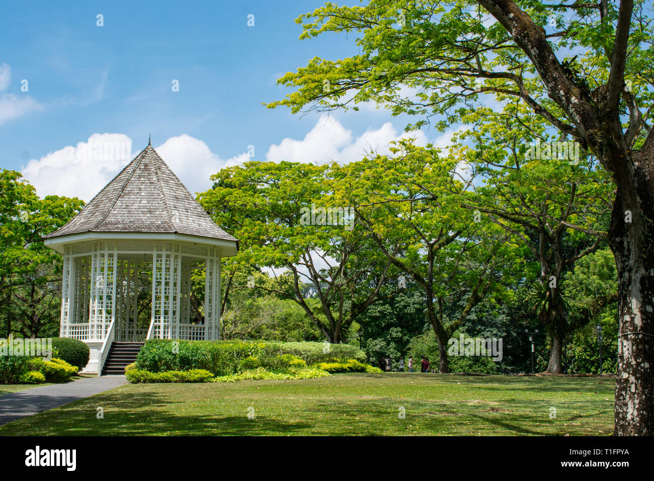 A walk in Botanic Gardens. Good place to take your mind off stress. - Stock Image